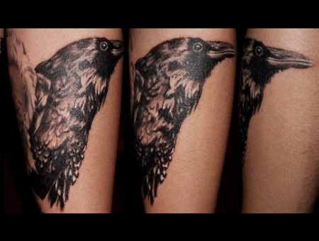 Raven  Crow  Bird  Tattoo Black White Forearm