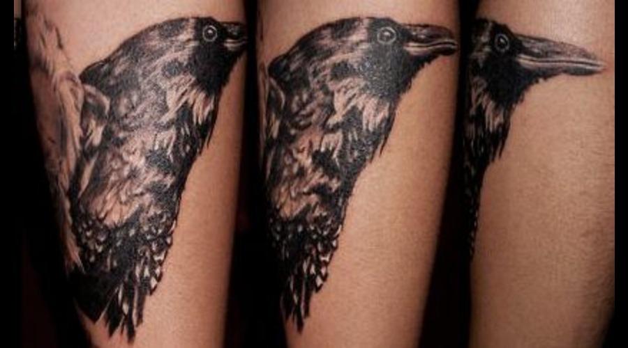 Raven  Crow  Bird  Tattoo Black White Forearm
