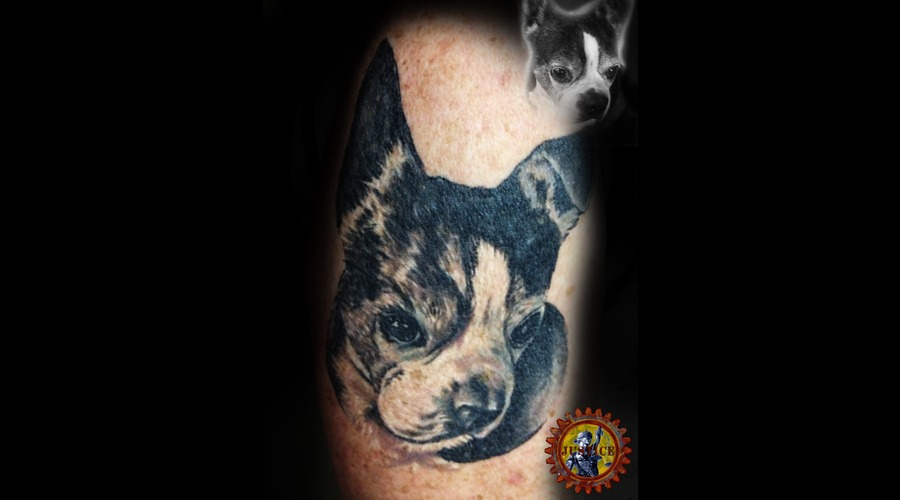 Dog  Pet  Animal  Portrait  Boston Terrier  Memorial Black White