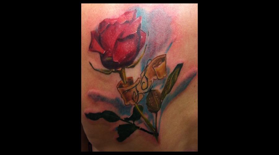 Rose Flower Realism Realistic Color Back