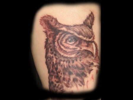 Owl  Bird  Rib  Black And Grey   Black Grey Ribs