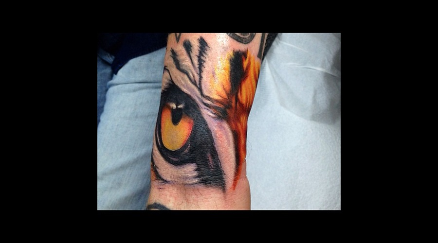 Tiger  Eye  Animal  Realistic Color