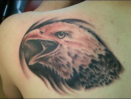 Eagle  Wildlife Black Grey Back