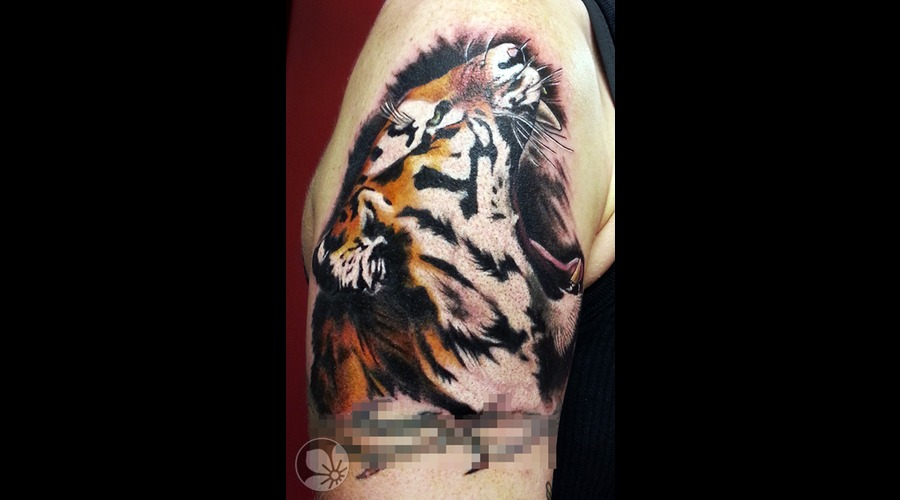 Tiger  Tigris Arm Realistic Color