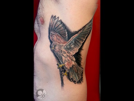 Falcon Bird Realistic Ribs Color
