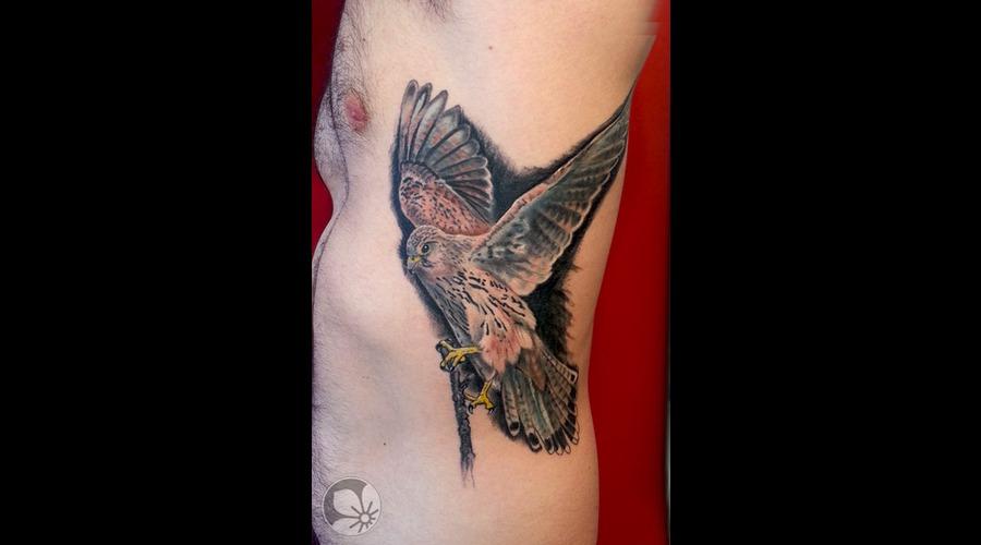 Falcon Bird Realistic Ribs Color