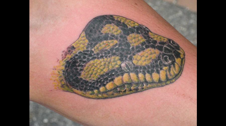 Snake  Python  Cobra  Serpant  Realism  Realistic Color