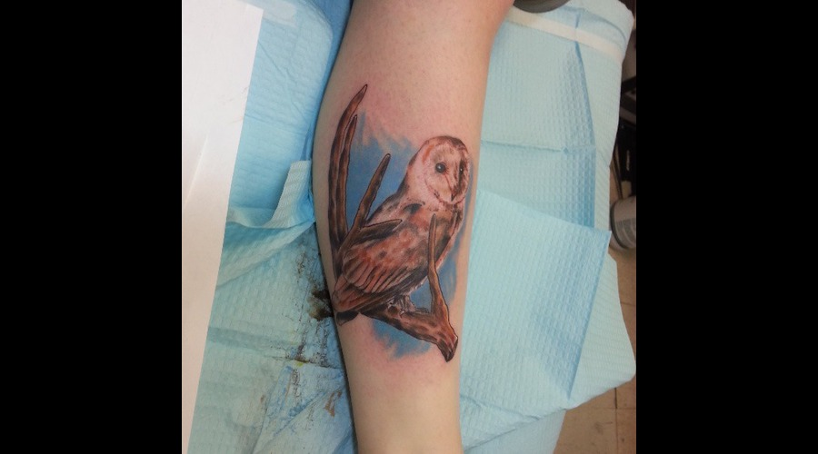 Owl Color