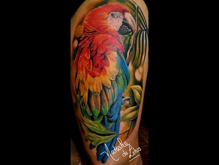Perroquet  Parrots  Macaw Color