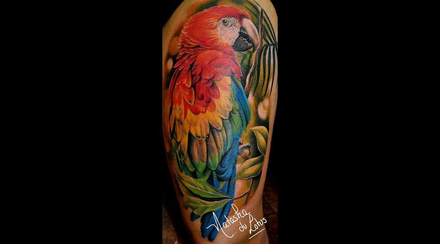 Perroquet  Parrots  Macaw Color