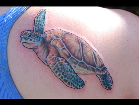 Sea  Turtle  Portrait Color