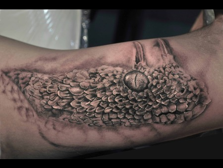 Horned Viper Snake Black White Arm