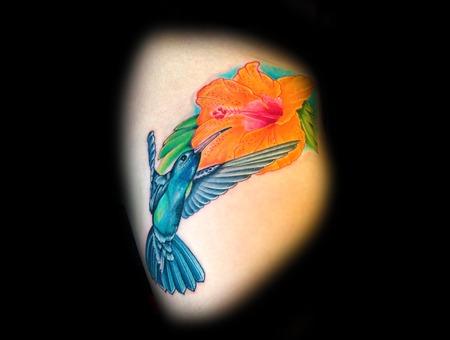 Hummingbird  Bird  Flower  Color Thigh