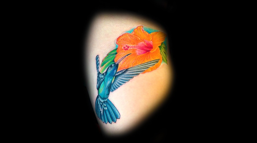 Hummingbird  Bird  Flower  Color Thigh