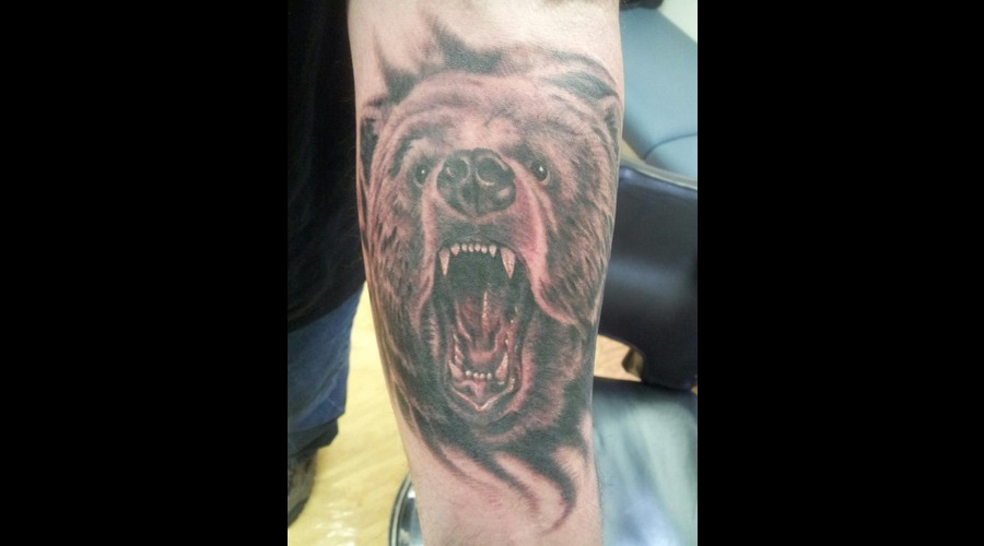 Realism  Bear  Portrait Black White Forearm