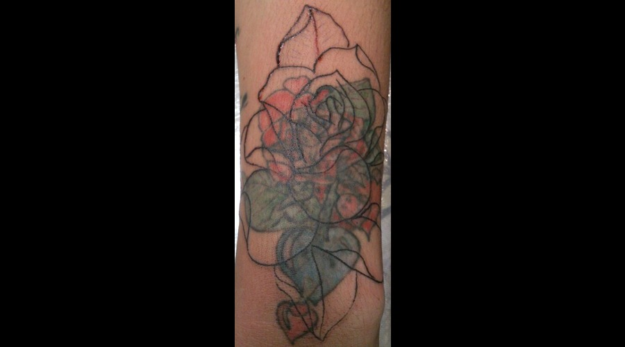 Cover Up  Stages  Flower  Rose  Colour Color