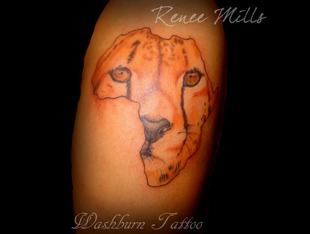 Cheetah  Africa  Color  Realistic  Realism Color