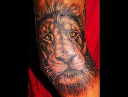 Lion  Portrait  Wild Life  Elbow Color Arm