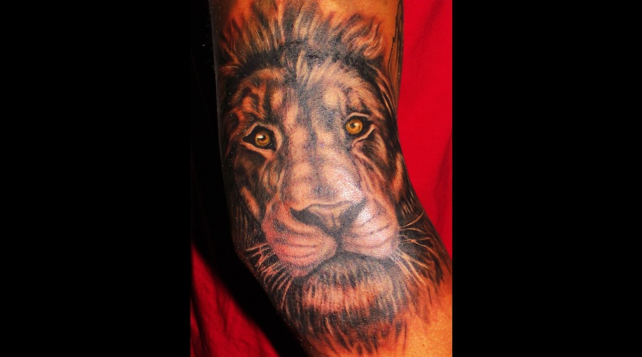 Lion  Portrait  Wild Life  Elbow Color Arm