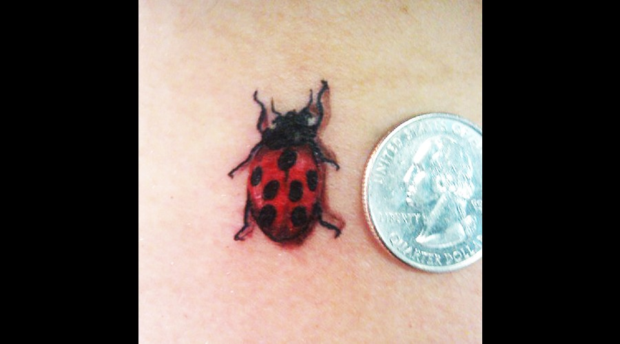 Lady Bug  Wild Life Color Shoulder