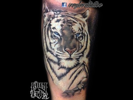 White Tiger Black Grey Arm