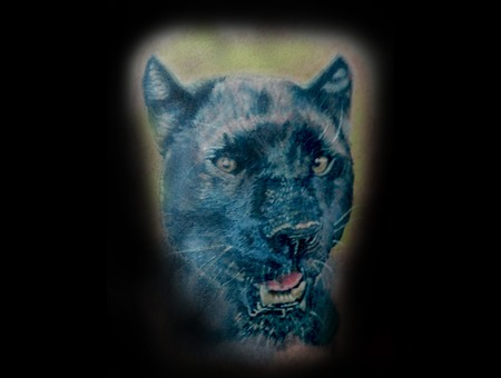 Animal  Panther  Cat  Black  Grey  Realism. Color Shoulder