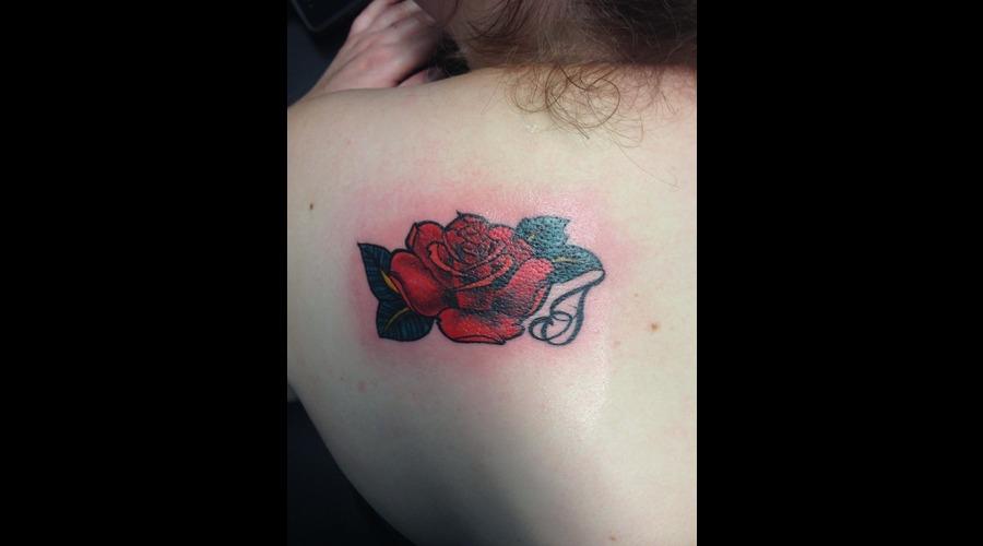 Red Rose Color Back