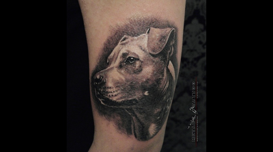 Dog Portrait Mastif