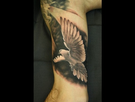 Dove  Bird  Realistic  Wing  Animal Black Grey Arm