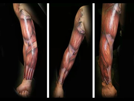 Freehand  Muscle  Color  Anatomy  Crazy Color Arm