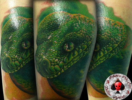 Marco Pik Ass  Pik Ass Tattoo  Snake  Colour  Portrait  Realistic Color Lower Leg