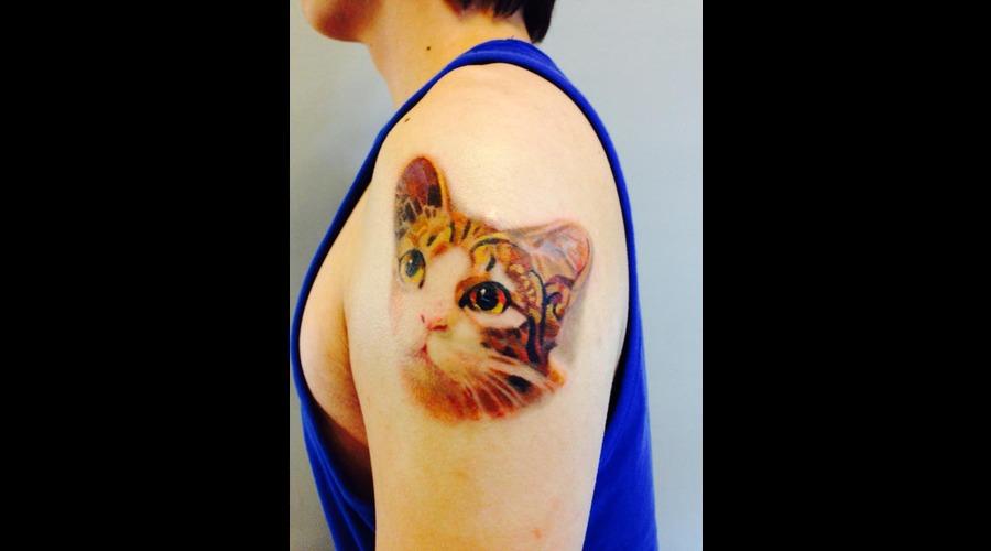 Cat Color Shoulder