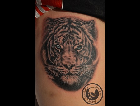 Tiger  Cat  Portrait  Realism