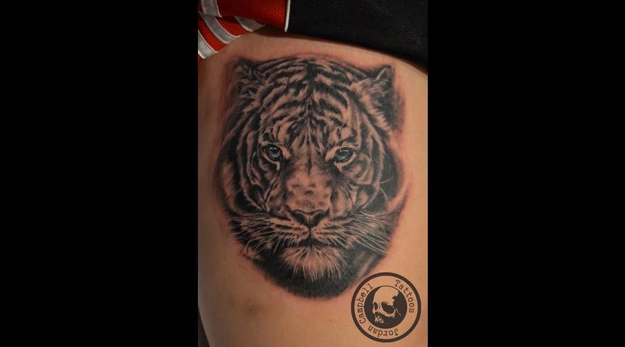 Tiger  Cat  Portrait  Realism