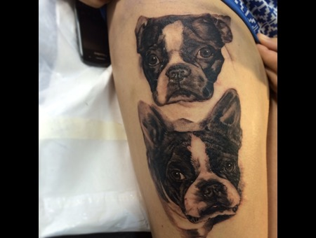 Mansbestfriend Dog Bostonterrier Black Grey Thigh