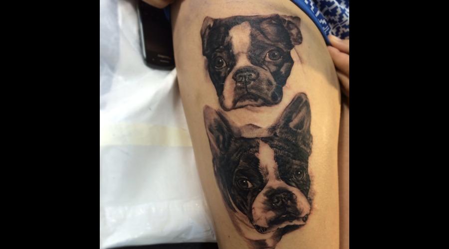 Mansbestfriend Dog Bostonterrier Black Grey Thigh