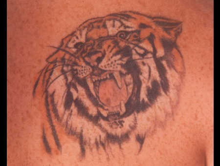 Tiger  Animal  Photo Realism   Color Shoulder