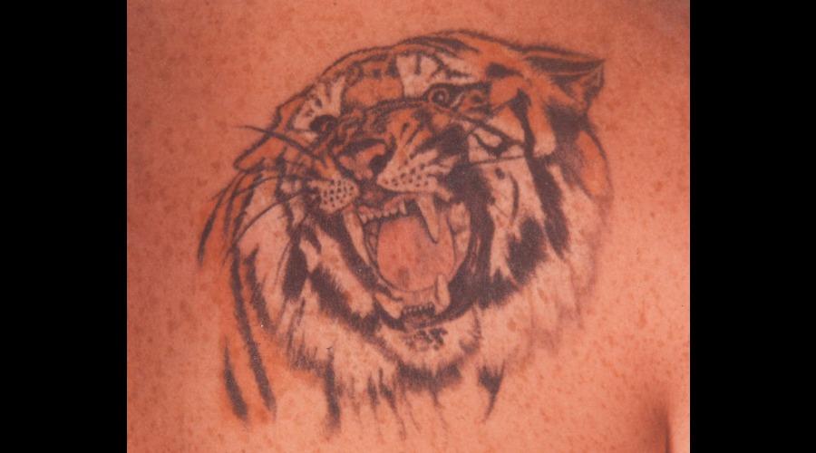 Tiger  Animal  Photo Realism   Color Shoulder