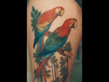 Green Wing Macaw  Scarlet Macaw  Macaw  Birds  Photo Realism. Color Thigh