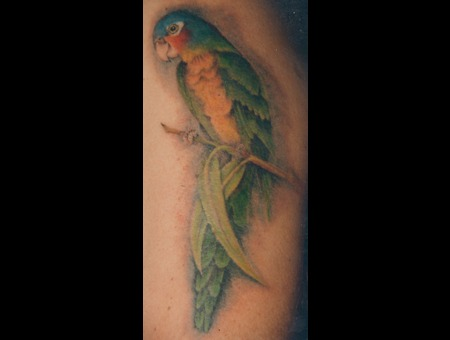 Blue Crown Conure  Bird  Parrot  Realism. Color Arm