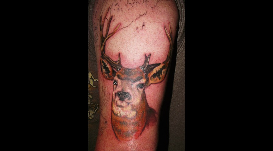 Deer  Wildlife Color Arm