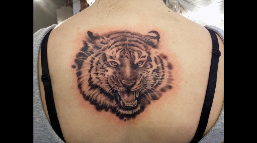 Tiger  Black N Grey Black Grey Back