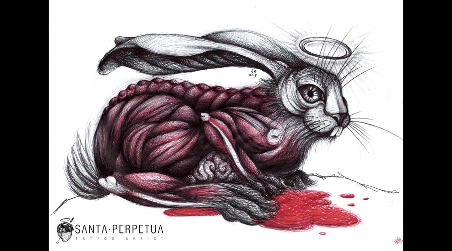 Skin Hare Drawing Santa Perpetua Color