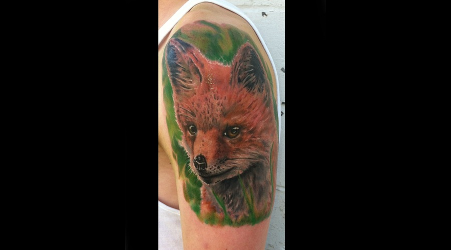 Fox  Animal  Animals  Pets  Color  Portrait Arm