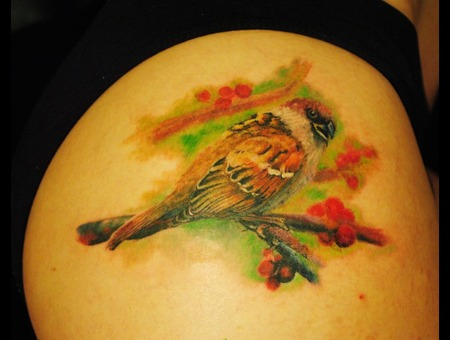 Sparrow  Bird  Color Thigh