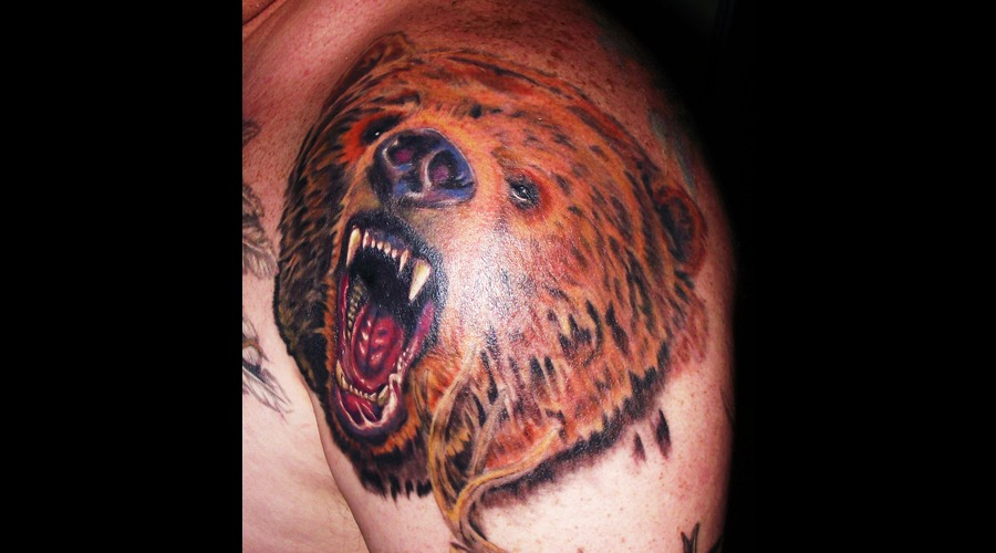 Wildlife  Grizzly  Bear  Portrait Color Shoulder