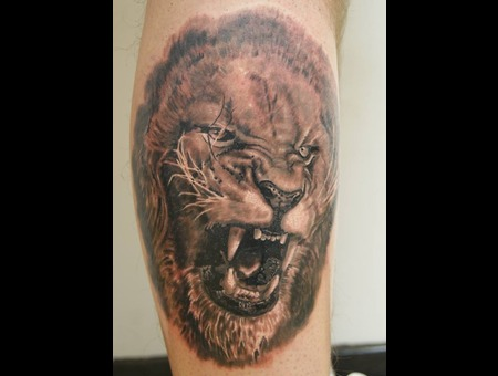 Lion  Animal Portrait Black Grey Lower Leg