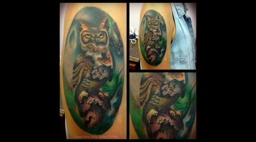 Color  Owl  Nature Bird   Color Arm