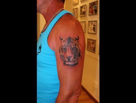 Tiger  Real  Realistic  Jungle  Bengal  Big Cat  Savanah Arm
