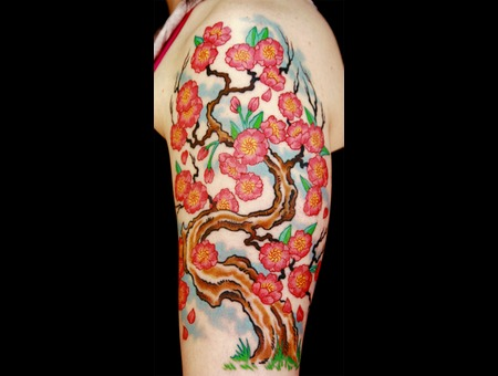 Cherry Blossoms Flower  Japanese  Asian Color